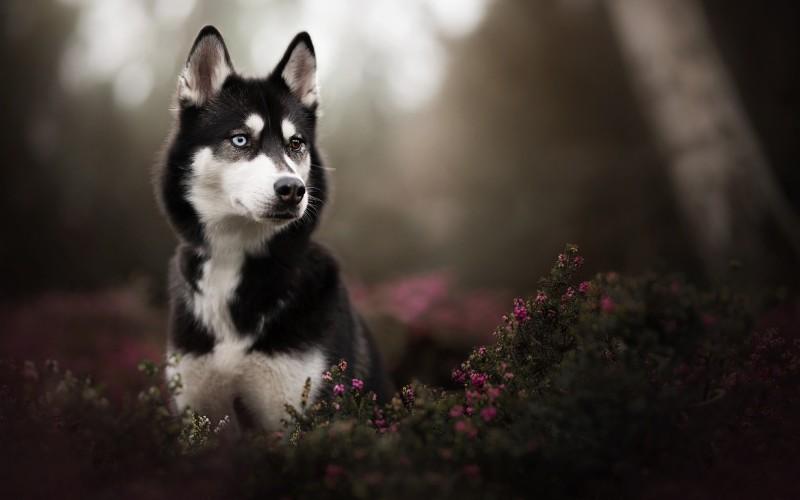 Собака гадание история первой любви 2