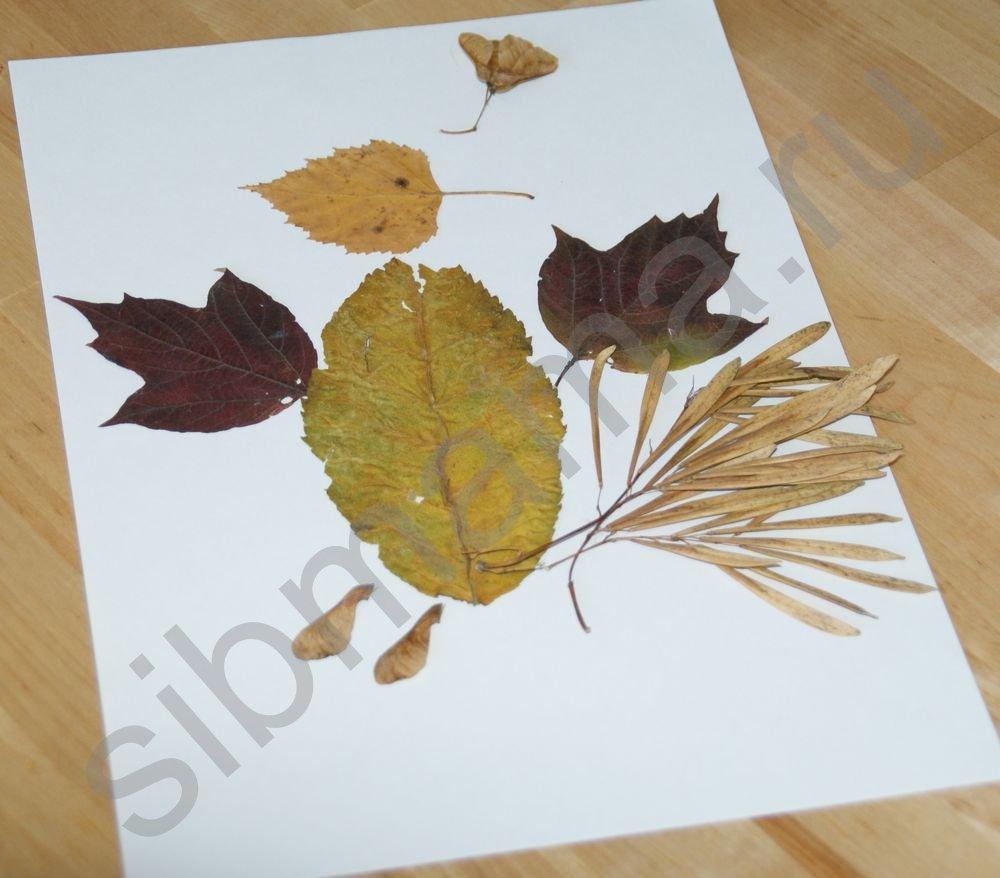Клей для поделок из листьев