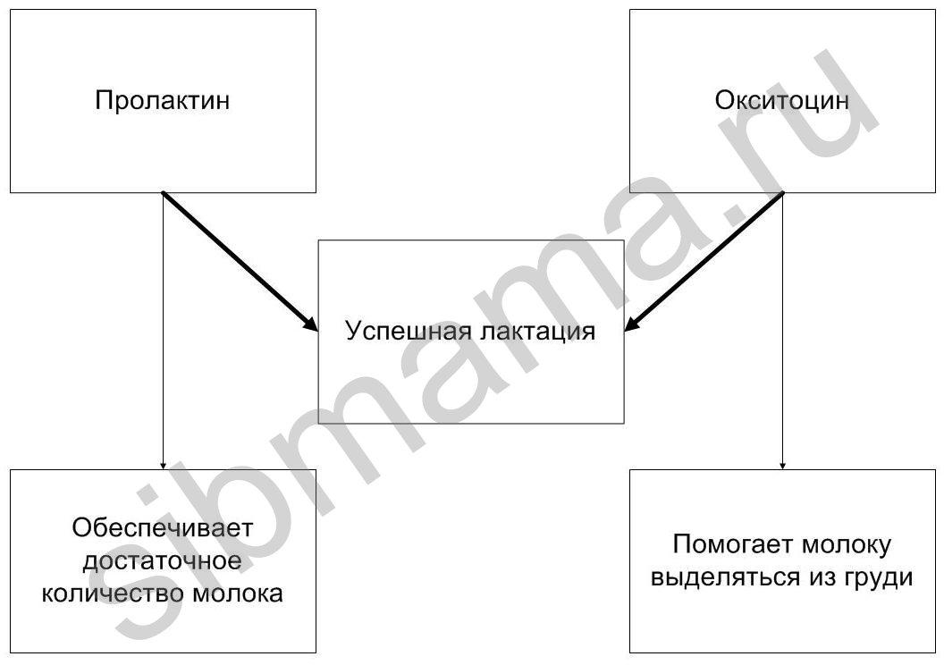 В схеме 2 расписана функция
