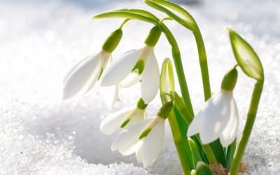 Картинки по запросу картинка весна для детей